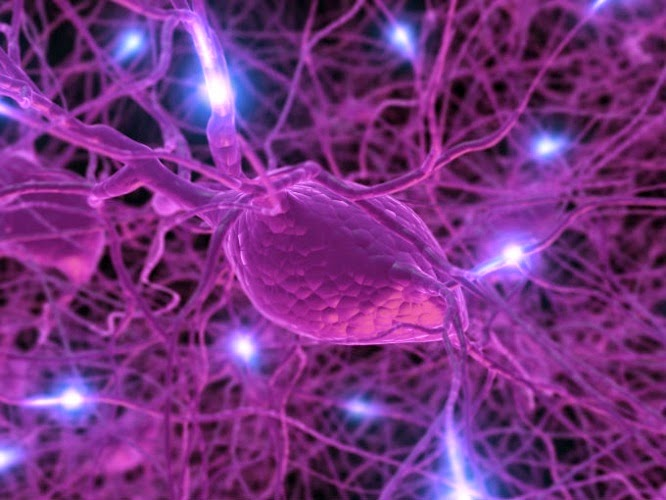 As hormonas regulam o nosso organismo