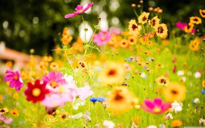 Chegada da Primavera