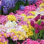 Energia das flores