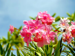 As energias que as flores libertam