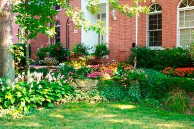 Conheça a orientação solar apropriada para cada planta