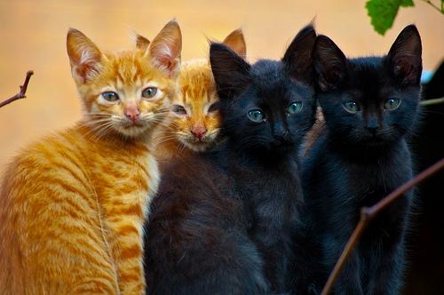 Os gatos estão a ficar mais velhos