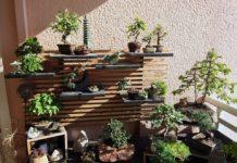 Como fazer um jardim bonsai