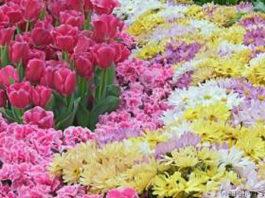 Chegou a primavera no jardim