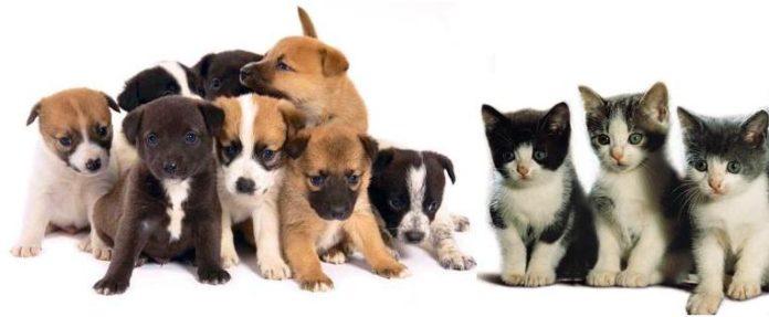 Esterilização animal