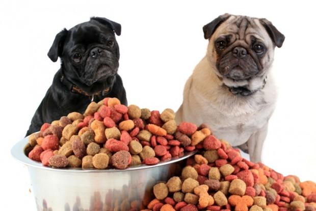 Sabe como alimentar o seu cão esterilizado?