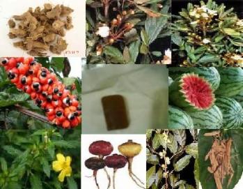Ervas medicinais afrodisiacas