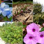 Calendário de plantação de arbustos