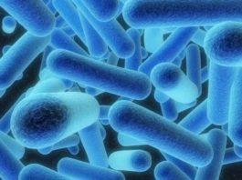 Conheça a Legionella