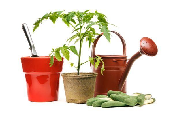 Calendário de jardinagem no mês de Janeiro