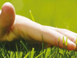 Relvado, saiba como mantê-lo verdejante e saudável