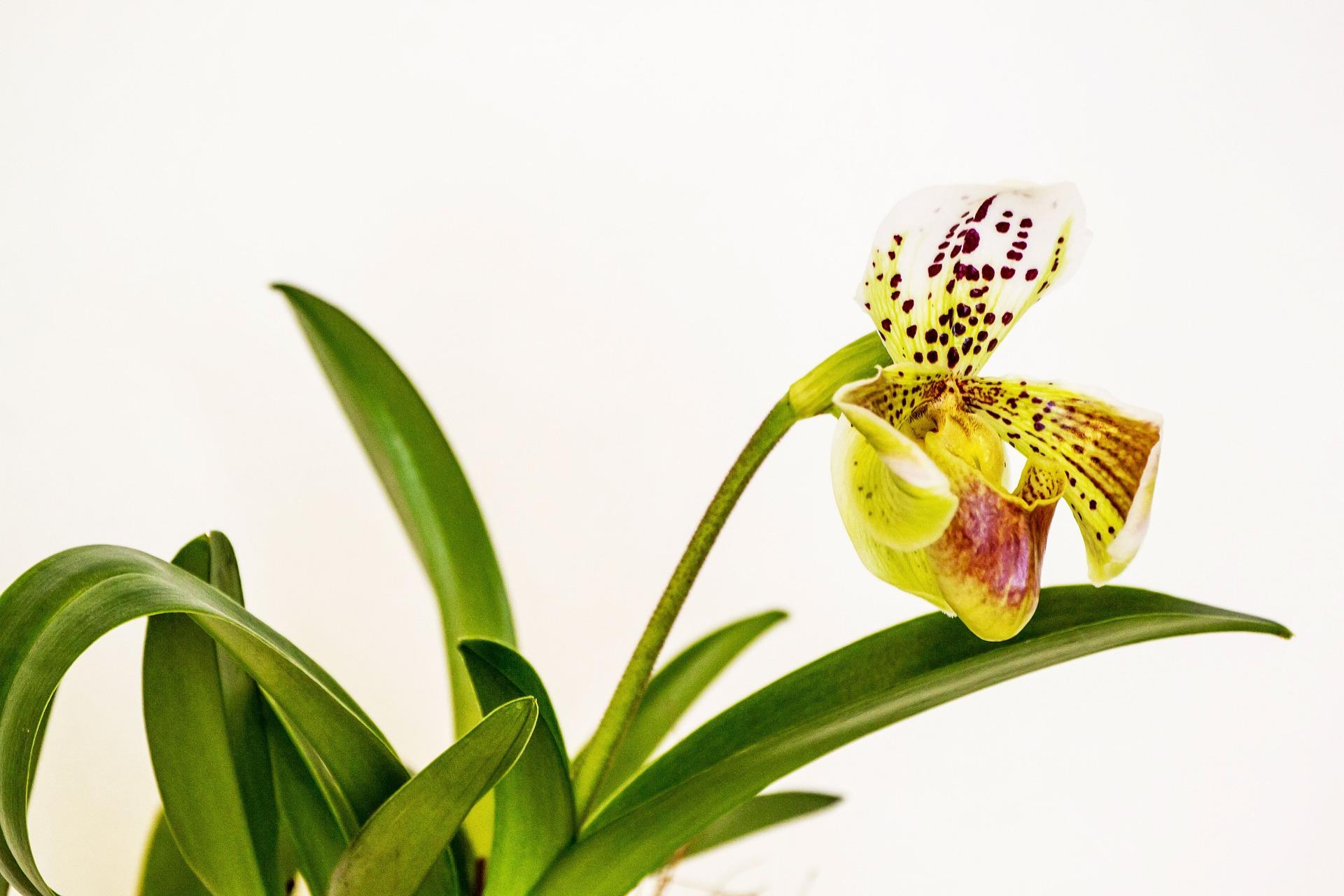 Como cuidar das suas Orquídeas: a luz ideal para as orquídeas