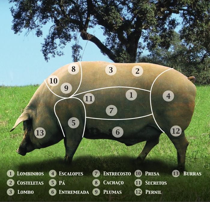 Divisão do porco alentejano