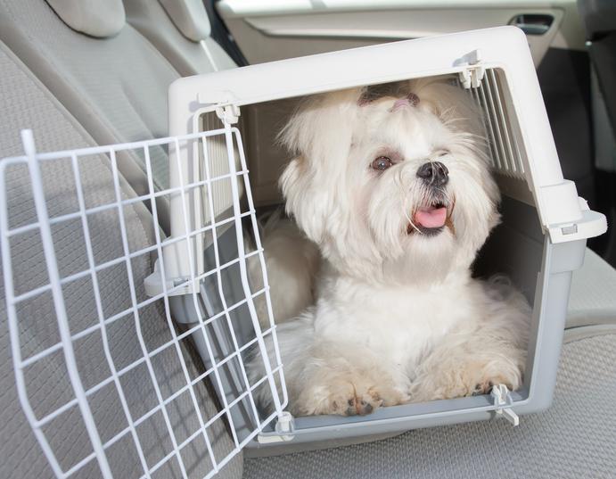 Transporte de Animais em segurança - cão
