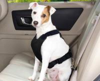 Transporte de animais em segurança