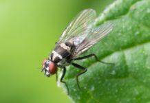 6 ingredientes que ajudam a afastar insectos