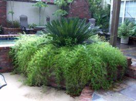 Como conseguir plantas mais densas