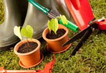 Cuidados a ter com as plantas todos os dias