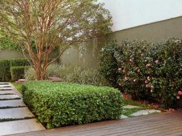 Saiba como escolher a cerca viva certa para o seu jardim