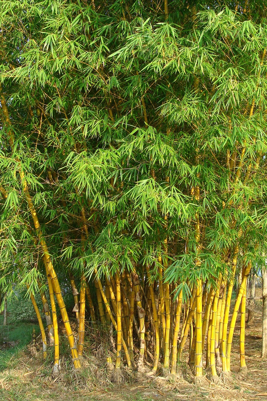 Decoração com bambus, no jardim ou em casa