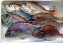 peixe mais saudável e delicioso