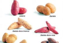 Conheça os diversos tipos de batata