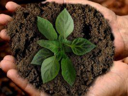 Como cuidar da terra para plantar durante todo o ano