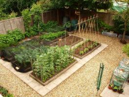 Como ter Uma Horta Bonita Em Casa