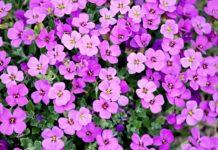 As plantas no calor do verão, saiba como protegê-las