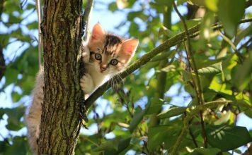 Tenha em atenção á saúde e higiene do gato