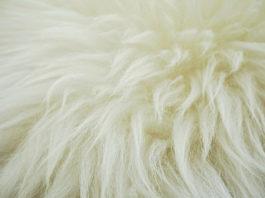 Produção de lã