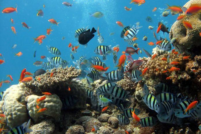 Aquário de água doce, a magia do oceano na sua sala