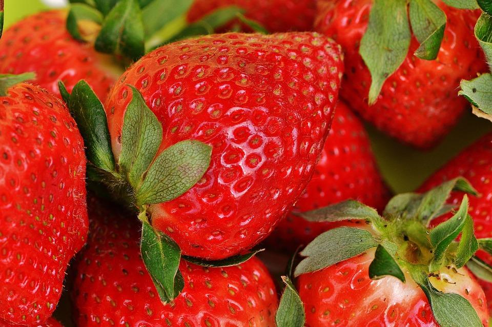 Como plantar morangos, a fruta preferida das crianças
