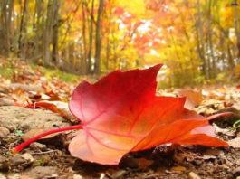 Adeus verão! Olá Outono!