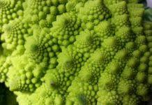 Saiba como plantar brócolos romanescos