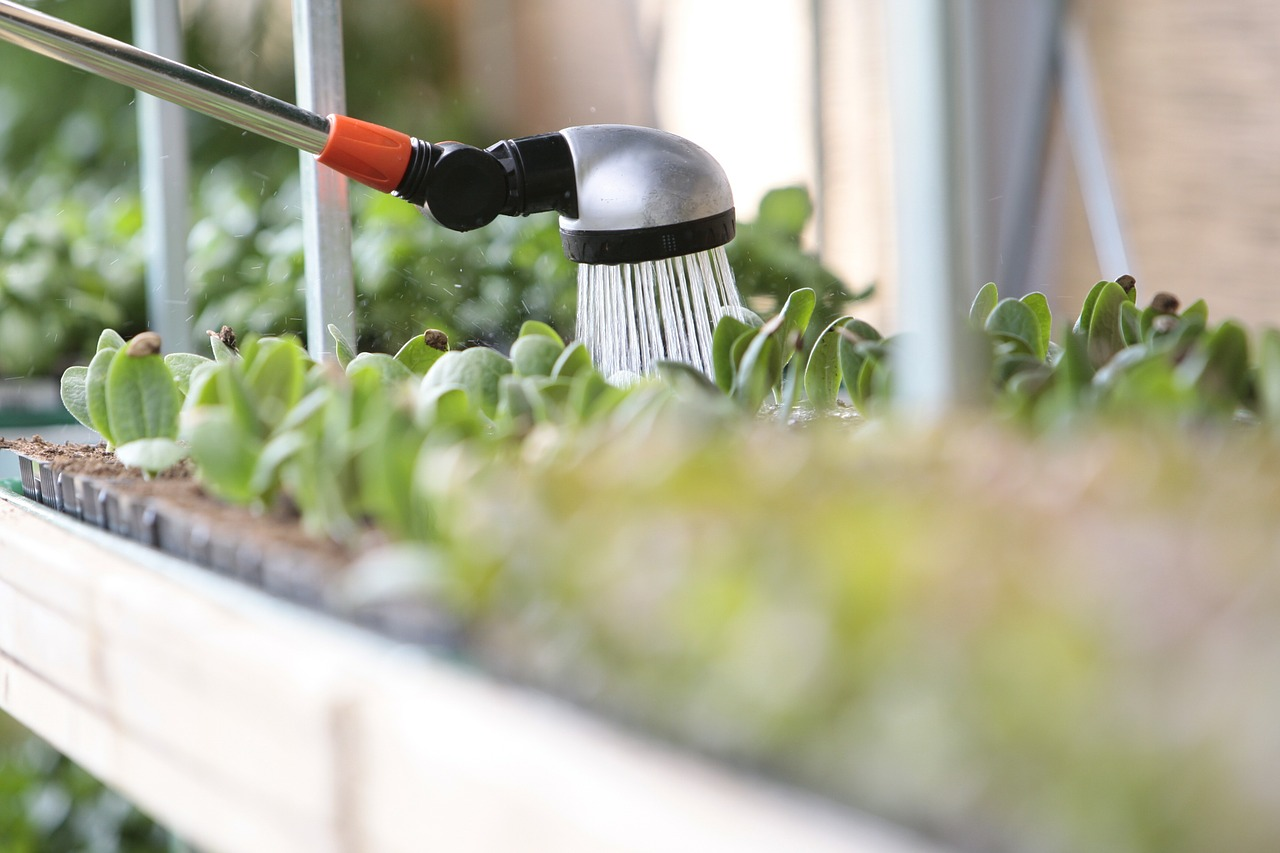 Como regar as plantas, com a quantidade certa de água