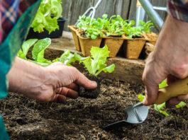 Como transplantar as suas plantas e flores