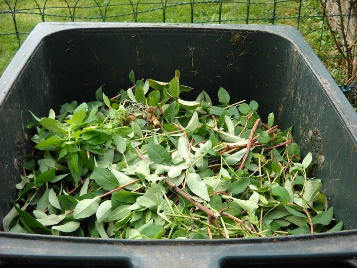 Dicas para uma boa compostagem