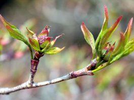 Crescimento das plantas