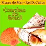 Exposição conchas do Brasil no Museu do mar
