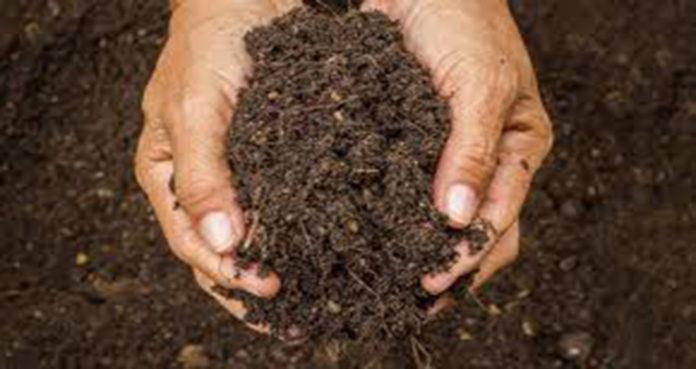 Saiba o que é a compostagem caseira