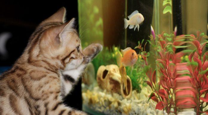 A iluminação do aquário - o Sol necessário à vida do aquário