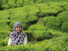 A origem do chá e o seu modo de preparação