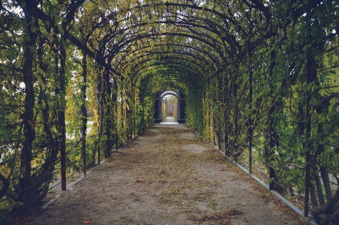 Plantas trepadeiras: a decoração ideal para o seu jardim