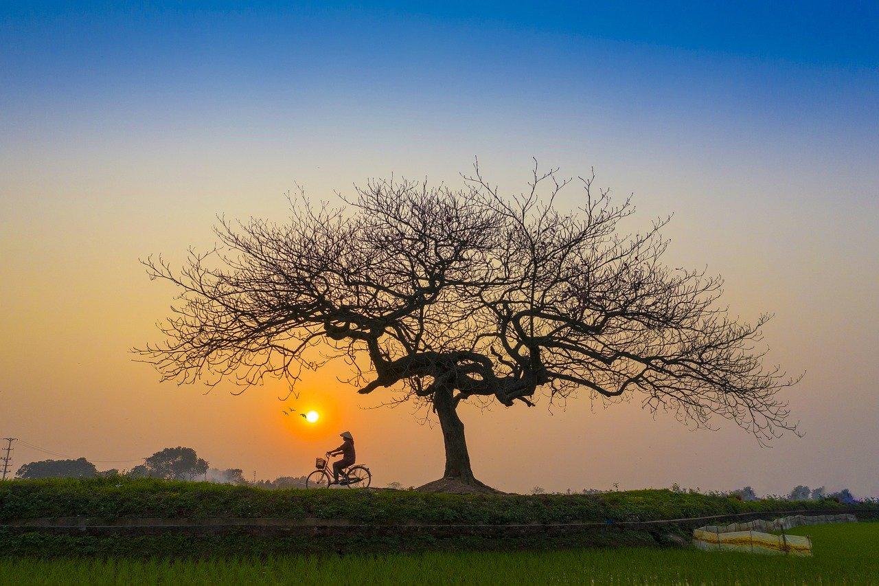 Andar de bicicleta - pedalar