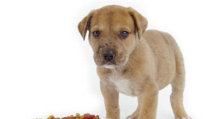 Como alimentar o seu cão de uma forma saudável