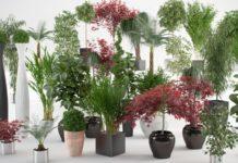 Cuidados básicos a ter com as suas plantas de interior