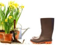 Cuide das suas plantas em Abril