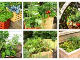 Onde plantar a sua horta em casa