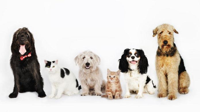 Os animais preferidos dos portugueses